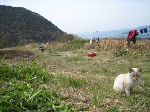 貴重な一歩!国産キヌア栽培へ挑んだ山梨の軌跡