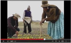 キノアに夢中 (2013年は「国際キノア年」) - YouTube