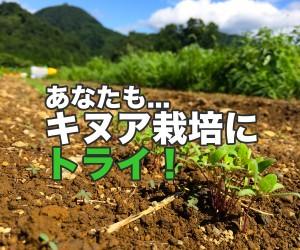 山梨県上野原市で国産キヌア栽培にトライしてみませんか