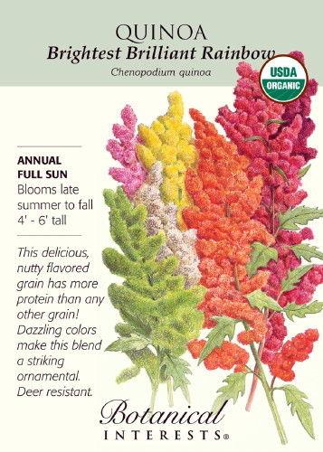 Organic Brightest Brilliant Rainbow Quinoa Seeds-500mg