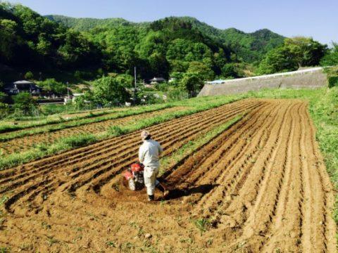 キヌア栽培にまつわる論文2016完全まとめ