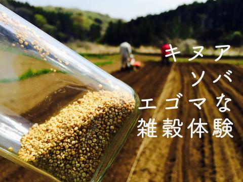 キヌア・ソバ・エゴマな雑穀体験